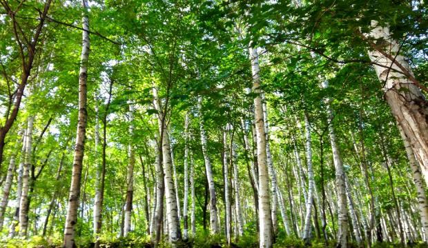 【6.26周六】穿越喇叭沟门 登顶南猴顶 清凉原始森林