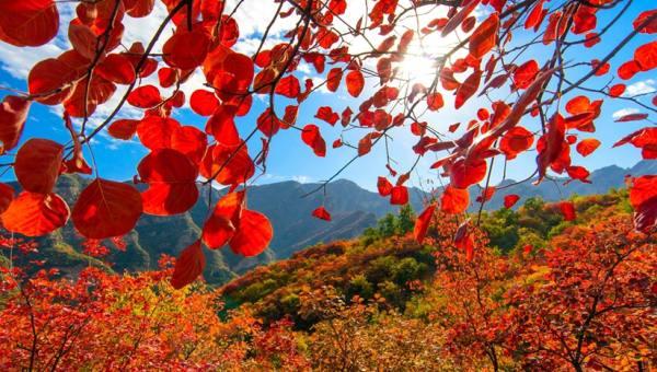 【10.20周六】坡峰岭 休闲徒步赏红叶