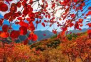 【10.27周六】坡峰岭 12KM休闲徒步赏红叶 鹰咀崖 I 狐狸旅行