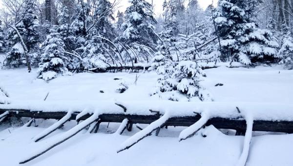 【1.19-1.20周末】雪村松岭 徒步穿越林海雪原 踏雪长白古驿道 I 狐狸旅行