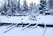 【1.5-1.6周末】雪村松岭 徒步穿越林海雪原 踏雪长白古驿道 I 狐狸旅行