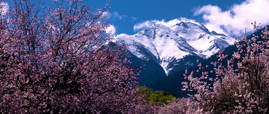 【小团定制】2019林芝桃花节 徒步南迦巴瓦大本营 雅鲁藏布大峡谷