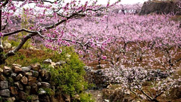 【4.14周日】平谷桃花节 徒步桃花海 10KM休闲穿越赏花 I 狐狸旅行