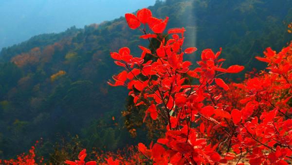 【10.24周日】标准版香八拉 徒步赏红叶 好汉坡 翠微顶 I 狐狸旅行