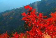 【10.20周日】标准版香八拉 徒步赏红叶 好汉坡 翠微顶 I 狐狸旅行